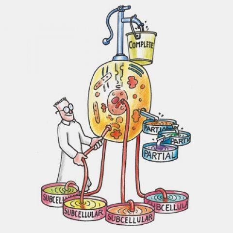Merck Biosciences Illustrationen
